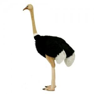 [HANSA] Ostrich(타조1) 4499번/130*60cm