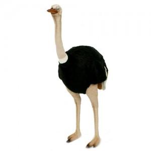 [HANSA] Male Ostrich Life Size(타조수컷1) 4118번/190*120cm