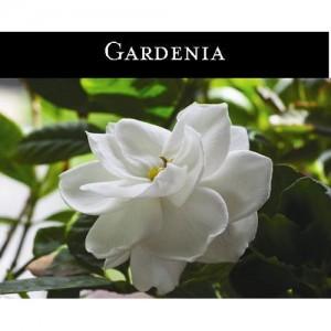 Gardenia (치자나무꽃) - 맥콜캔들