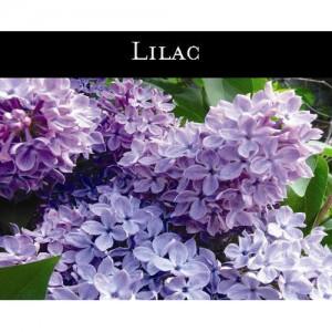 Lilac (라일락 꽃) - 맥콜캔들