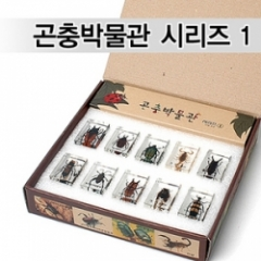 곤충박물관