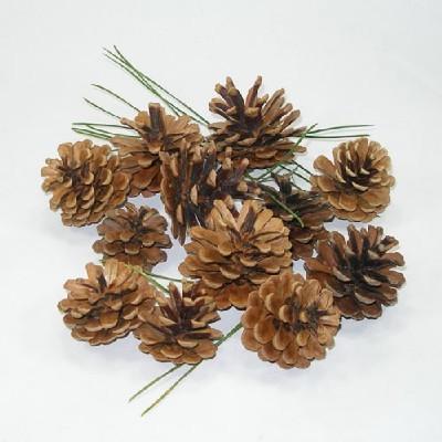 천연나무재료/솔방울/나무공예재료