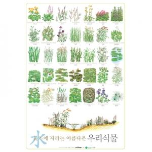 물가에 자라는 우리 식물 포스터