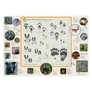 야생동물 발자국,똥 책받침