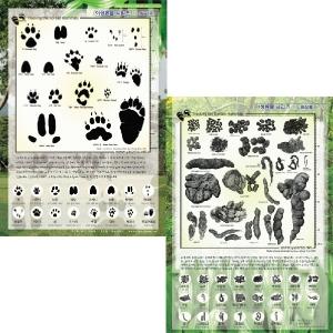야생동물 발자국 및 배설물 1 포스터