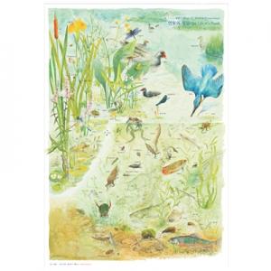 연못의 생물 포스터