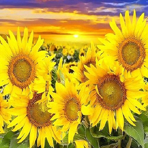 피포페인팅 Q3263 태백 해바라기꽃밭 DIY명화그리기 홈갤러리