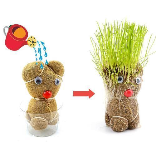 2000 머리가자라는잔디인형 씨앗 모종 쉬운식물키우기
