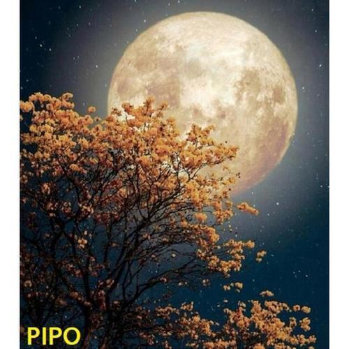 아이윙스 피포페인팅 K100 C 행복 SS2S Moon DIY명화그리기 DIY그림그리기