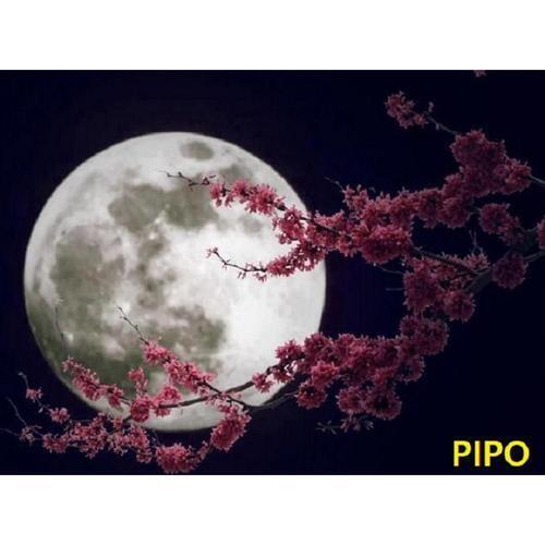 아이윙스 피포페인팅 K100 F 기도 SS2S Moon DIY명화그리기 DIY그림그리기