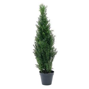 측백나무_90cm